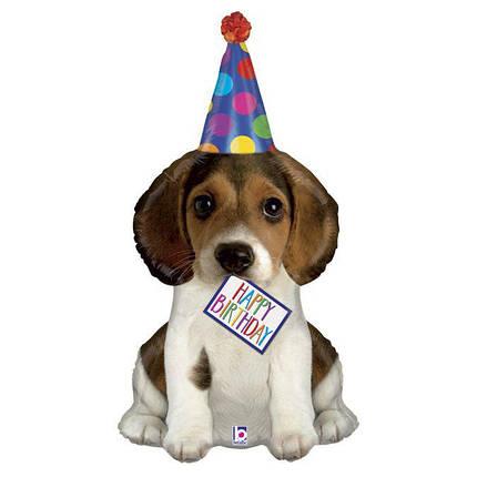 Фол шар фигура Щенок в колпаке Happy Birthday (Грабо), фото 2