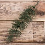 Веточка кипариса, фото 2