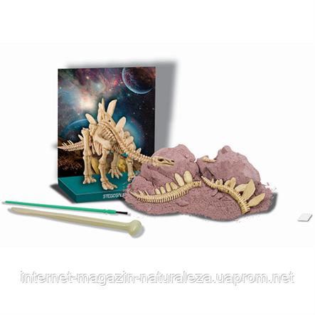 Набор для творчества Скелет стегозавра 4M, фото 2