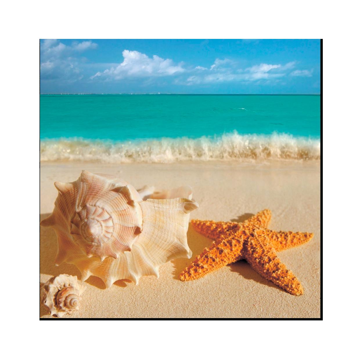 Картина на стекле Ракушка и морская звезда