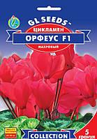 """Семена цветов Цикламен """"Орфеус F1"""", махровый, 5 шт, """"GL SEEDS"""", Украина"""