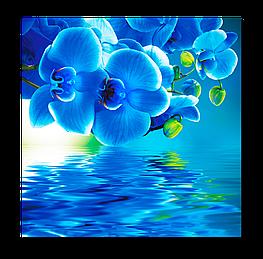 Картина на стекле Синяя орхидея