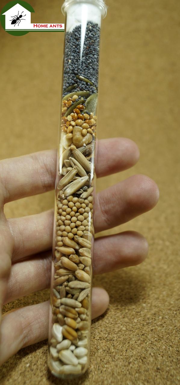 Корм для муравьев messor structor . Годовой запас