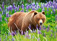 """Пазлы на 120 элементов """"Медведь на лугу"""", фото 2"""