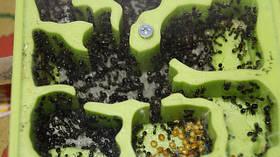 Формікарії-мурашині ферми
