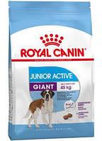 Сухой корм (Роял Канин) Royal Canin Giant Junior Active 15 кг для щенков собак очень крупных размеров