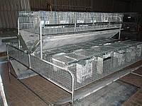 Клетка для  кролей  откормочная фермерская КО - 1.5Ф
