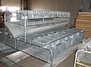 Клетка для кроликов КО 1,5 Ф  (откормочная 108 голов )., фото 4