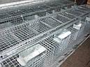 Клетка для кроликов КО 1,5 Ф  (откормочная 108 голов )., фото 5