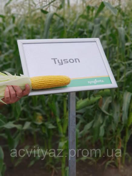 Семена сладкой (сахарной) кукурузы Тусон F1, 100 тыс. семян