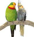 Игрушка Колокольчик на цепочке для попугая 18 см, фото 2