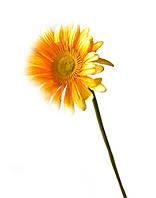 """Цветок """"гербера"""" (54 см)"""