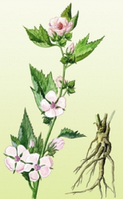Алтей лекарственный(корень)