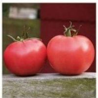 Семена помидора Афен F1 розовый   8 шт. индетерминантный