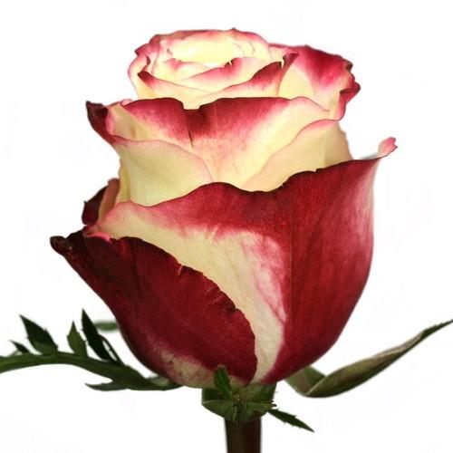 Живые цветы оптом киев прайс купить цветы в магнитогорске