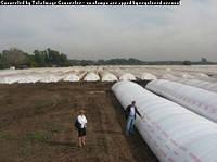 Хранение зерна в полиэтиленовых рукавах