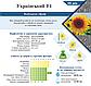 Семена подсолнечника УКРАИНСКИЙ F1 105-108 дн. ВНИС (бесплатная доставка) Урожай 2018 г., фото 2