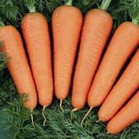 Насіння моркви Санта Круз F1 / Santa Cruz F1  SEMINIS (від 200000 насінин)