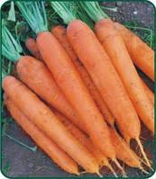 Морковь Матч F1 100 000 сем. Клоз (Clause).