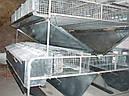 Клетка мини ферма для кролей универсальная ., фото 4
