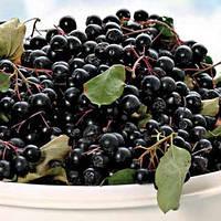 Рябина черноплодная (контейнер 3 л, высота растения 20--25см)