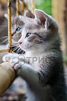 Настенный обогреватель «Котята» Трио