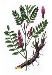 Солодка  ( корень измельчённый ) 100 грамм