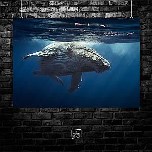 Постер Big whale, плывущий кит. Размер 60x42см (A2). Глянцевая бумага