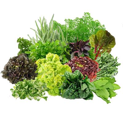 Семена пряных культур, салатов