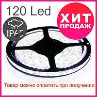Светодиодная лента 3528-120 IP65, герметичная, белая, фото 1