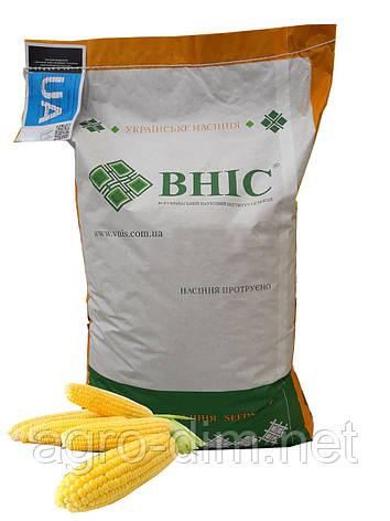 "Семена кукурузы ""Гран 310"", фото 2"