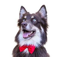 Аксесуари для собак