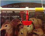 Ниппельная поилка чашечная поилка для кур голубей, фото 3