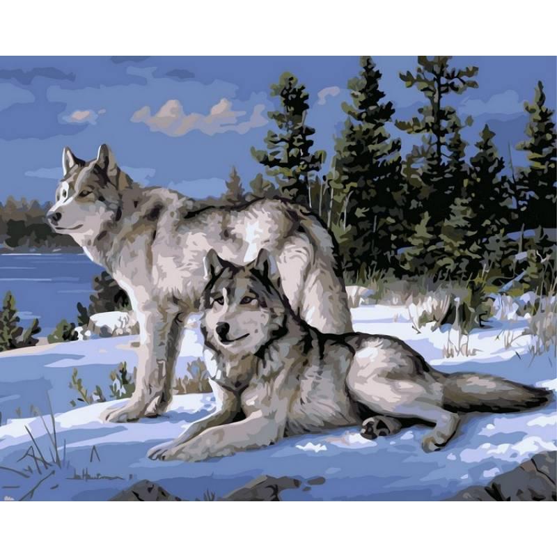 "Раскраска по номерам 50х40см ""Волки на снегу"""