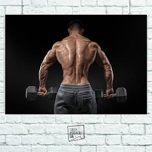 Постер Bodybuilder с гантелями со спины. Размер 60x42см (A2). Глянцевая бумага