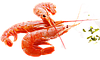 Креветки черноморские крупные сладкие 2,5 - 3,5 см, фото 6