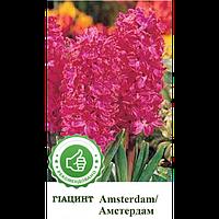 Гиацинт Амстердам