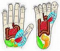 КУРСЫ по Су-Джок терапии (БАЗИСНЫЙ курс), фото 1