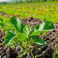 Органічне землеробство – запорука багатого врожаю