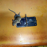 Мышеловка сверхчувствительная, фото 1