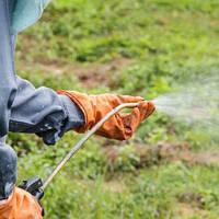 Стоит ли использовать гербициды в саду