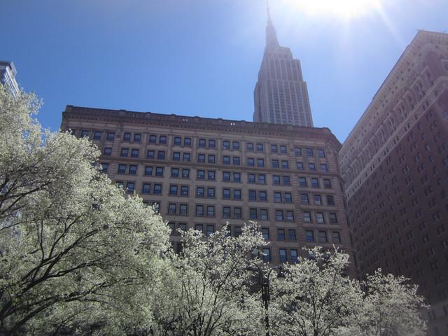 Раздел Кофты с вырезом - фото teens.ua - Нью-Йорк,цветущие деревья у Рокфеллер центра