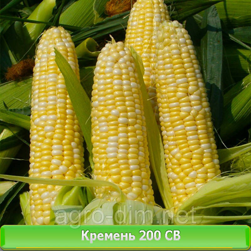 Семена кукурузы Кремень 200 СВ