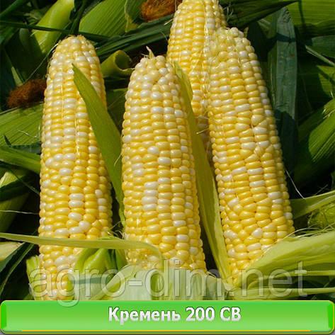 Семена кукурузы Кремень 200 СВ, фото 2