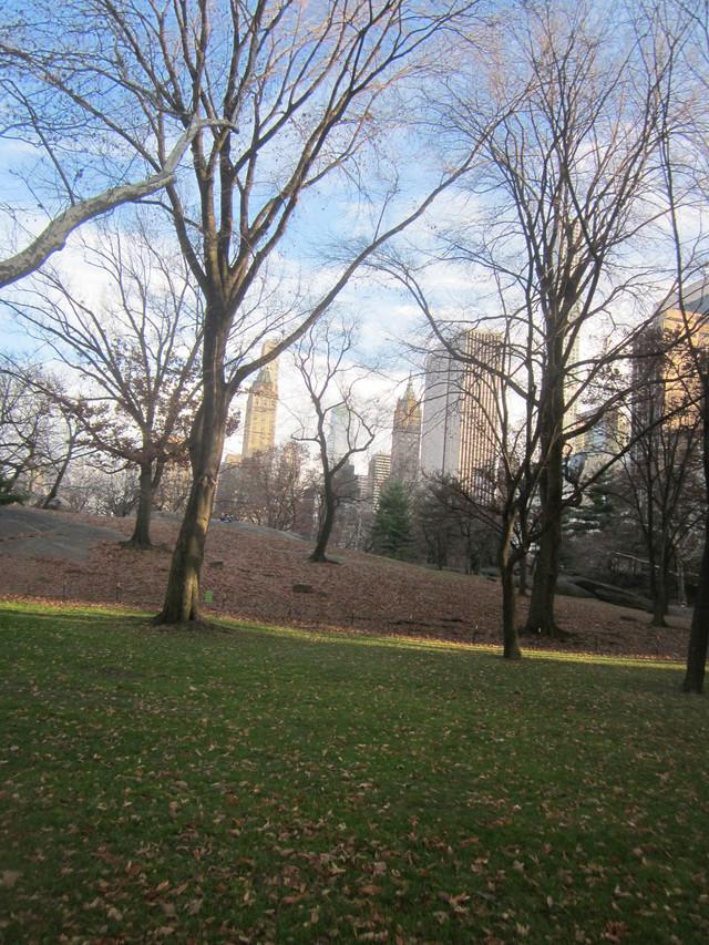 Раздел Кофты с вырезом - фото teens.ua - Нью-Йорк,Центральный парк