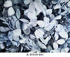 Стабилизированная гортензия голубая, 641