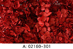 Стабилизированная гортензия красная, 301