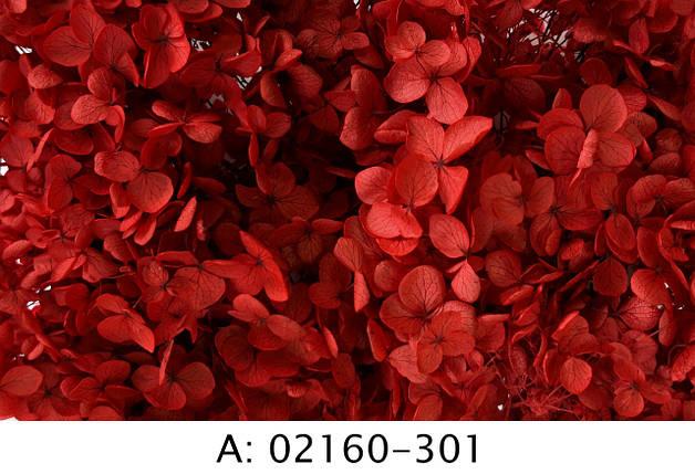 Стабилизированная гортензия красная, 301, фото 2