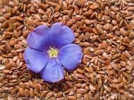 """Фиточай  для похудения """"Семена льна """" 100 грамм"""