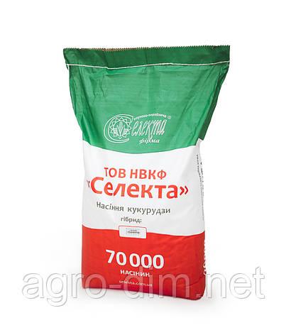 """Семена кукурузы Кредо ТОВ НВКФ """"Селекта"""", фото 2"""